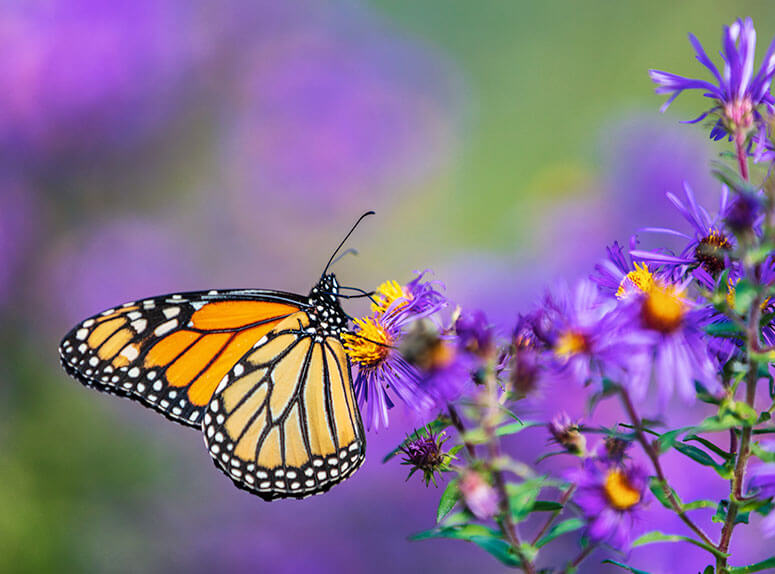How to attract nature to your garden